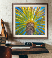 California Palms Collection
