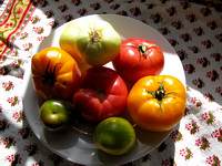 Plate of Colorful Tomatoes